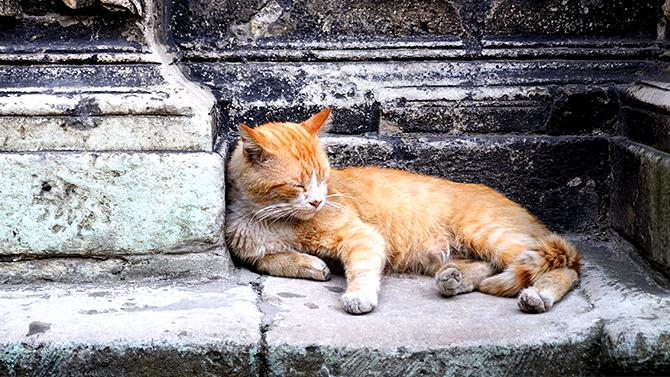 chat pour rencontre jeune)