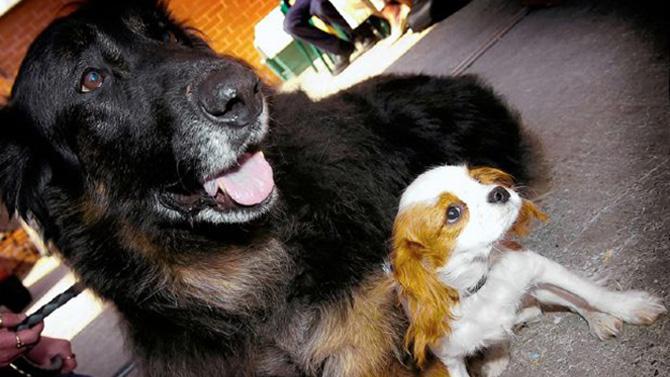 cherche homme qui aime les animaux)