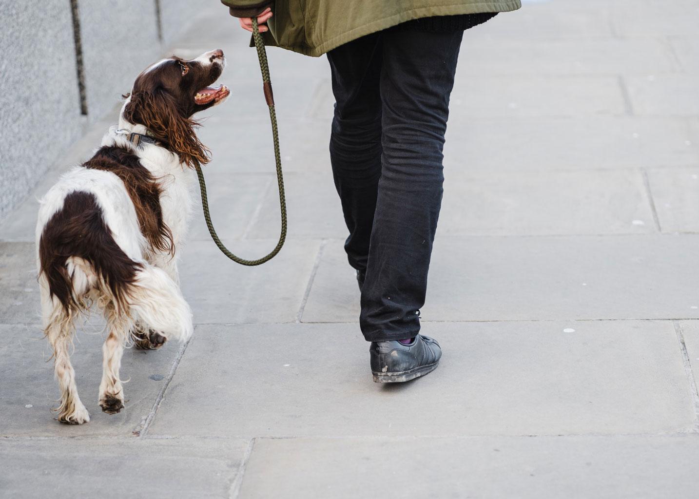 site de rencontre promenade chien